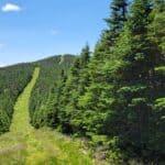 Randonnée aux monts Gosford, Petit-Gosford, Cap Frontière et Boundary Peak